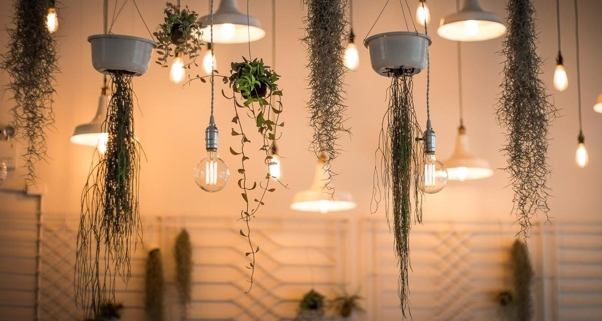 5 Best Ways to Decorate a Home Using Plants